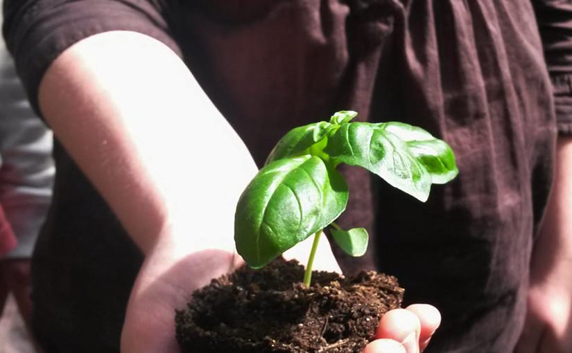 Tips til utplanting